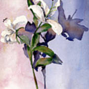 Shadow Lilies Art Print