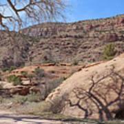 Shadow Tree Dominguez-escalante Canyon Colorado Art Print