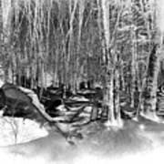 Shadows Of Winter Art Print