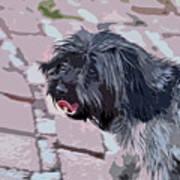 Shaggy Pup Abstract Art Print