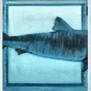 Shark In Magic Cubes - 2 Of 3 Art Print