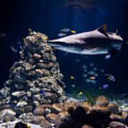 Shark In Zoo Aquarium Art Print