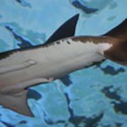 Shark Tail Art Print