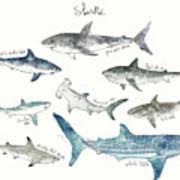 Sharks - Landscape Format Art Print