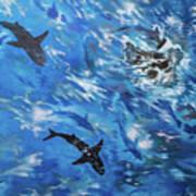 Sharks#3 Art Print