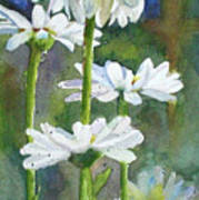 Shasta Daisies Art Print