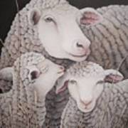 Sheep Ahoy Art Print