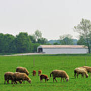 Sheep And Covered Bridge Art Print