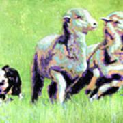 Sheep And Dog Art Print