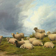 Sheep In A Pasture Art Print