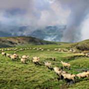 Sheep In Carphatian Mountains Art Print