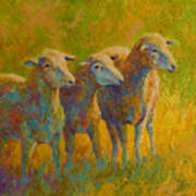 Sheep Trio Art Print by Marion Rose
