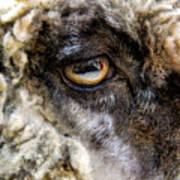 Sheep's Eye Art Print