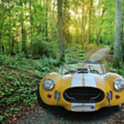 Shelby Ac Cobra In The Woods Art Print