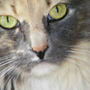 Shelby's Eyes 4 Art Print