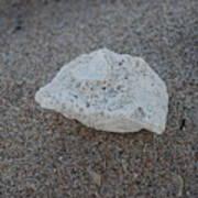 Shell And Sand Art Print