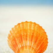 Shell On Beach Art Print