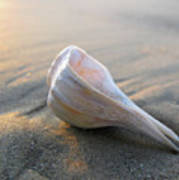 Shell On The Beach Art Print