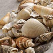Shellfish Shells Art Print