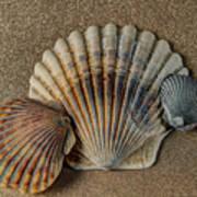 Shells 1 Art Print