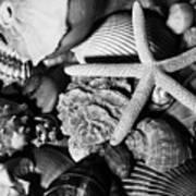 Shells And Starfish In Black And White Art Print