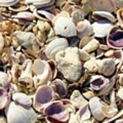 Shells Aplenty Art Print