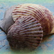 Shells Art Print by Diane Reed