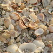 Shells On Beach Art Print