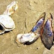Shells On The Beach Of Jekyll Art Print