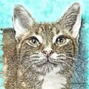 Shelter Cat Fantasy Art Art Print
