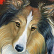 Sheltie - Collie Art Print