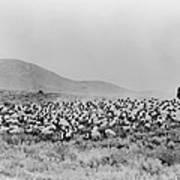Shepherd And Flock, C1942 Art Print