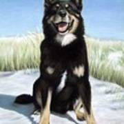 Shepherd Mix Timmy Art Print