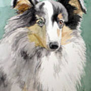 Shetland Sheep Dog Art Print