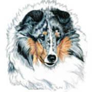 Shetland Sheepdog, Sheltie, Blue Merle Art Print