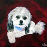 Shih Poo Art Print