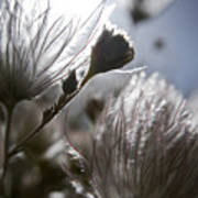 Shimmering Flower II Art Print by Ray Laskowitz - Printscapes