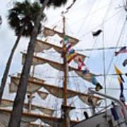 Ships Palm Art Print