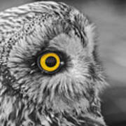 Short-eared Owl Mono Coloured Eye Art Print