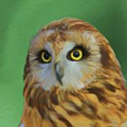 Short Eared Owl On Green Art Print