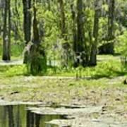 Shreks Swamp Art Print