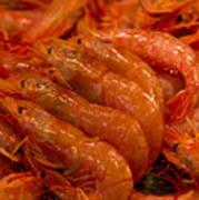 Shrimps Art Print