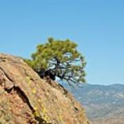 Shrub And Rock At Canon City Art Print