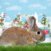 Shy Brown Dwarf Bunny Portrait Art Print