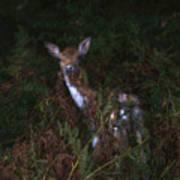 Shy Fallow Deer 4 Art Print