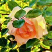 Shy Rose Art Print