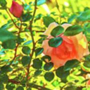 Sketchy Rose Art Print