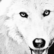 Shy Wolf Art Print