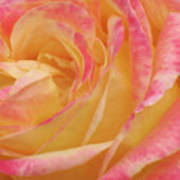 Shy Yellow Rose Art Print