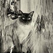 Siamese Cat Posing In Black And White Art Print